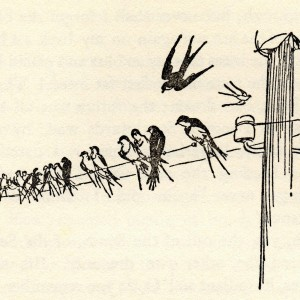 wind-in-the-willows-bird-on-wire-b06e95c70613be961baef3396ccf1538